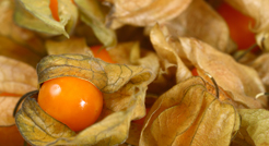 Freeze Dried Cape Gooseberry (Physalis)